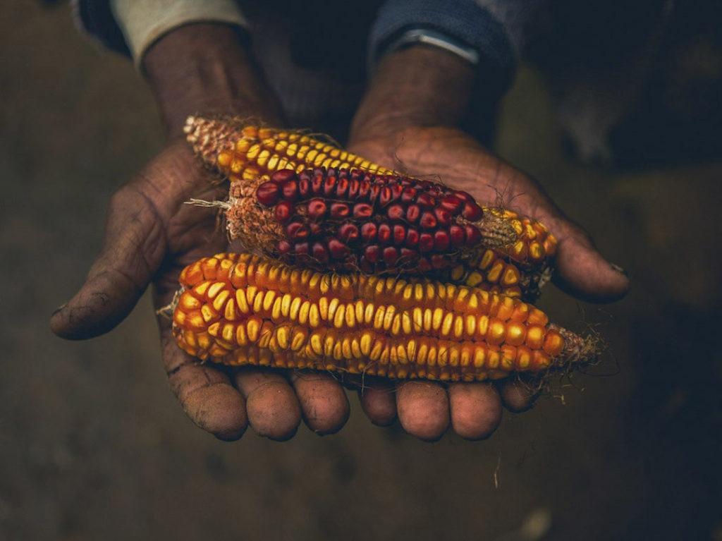 Software livre para comercialização da economia solidária, agroecologia e reforma agrária